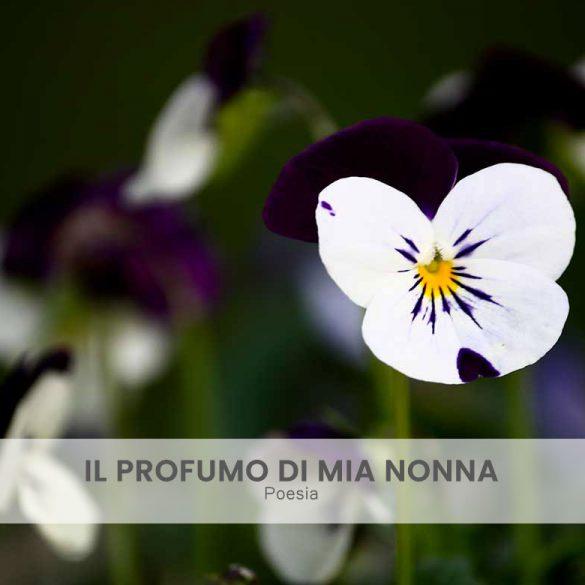 Il profumo di mia nonna poesia e foto di Emanuela Gizzi