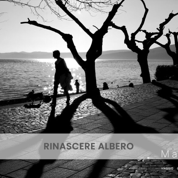 Rinascere albero PhotoCredit Emanuela Gizzi Mapping Lucia