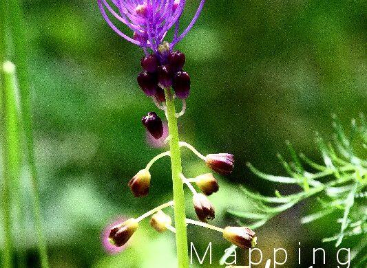 Occhietti viola PhotoCredit MappingLucia