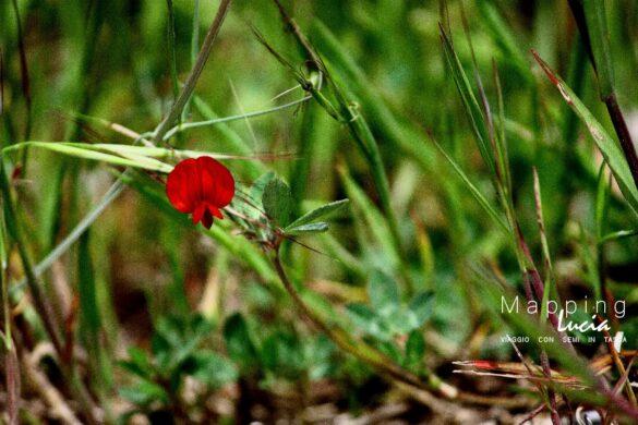 Rosso selvatico PhotoCredit MappingLucia