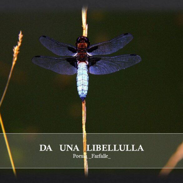 Da una libellula Farfalle Pht Emanuela Gizzi Mapping Lucia