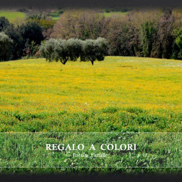 Regalo a colori Farfalle Pht Emanuela Gizzi Mapping Lucia