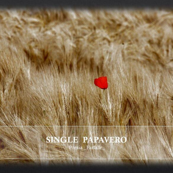 Single Papavero Farfalle Pht Emanuela Gizzi Mapping Lucia