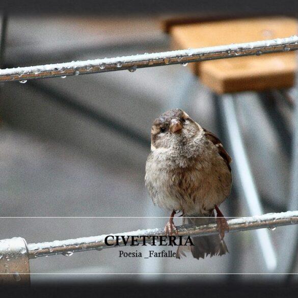 Civetteria Farfalle Pht Emanuela Gizzi Mapping Lucia