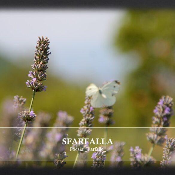 Sfarfalla Farfalle Pht Emanuela Gizzi Mapping Lucia