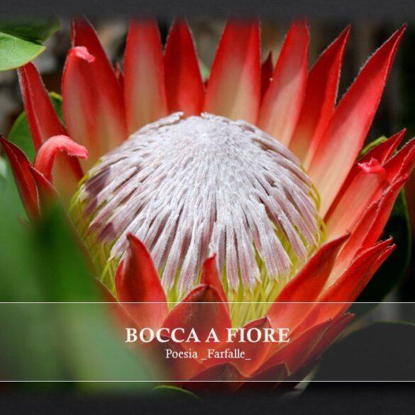 Bocca a fiore Farfalle Pht Emanuela Gizzi Mapping Lucia