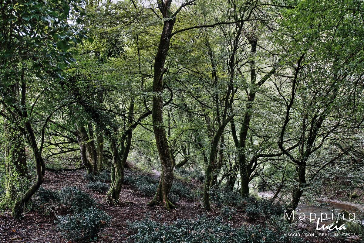 Variazione d'alberi e rami sul Crémera  PhotoCredit Emanuela Gizzi Mapping Lucia