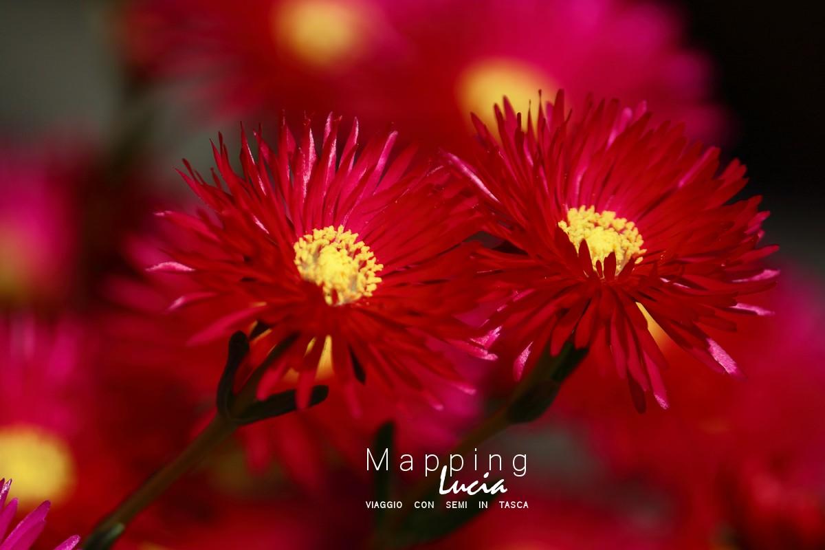 Fotografie del Cuore - Fiori - Pht Emanuela Gizzi Mapping Lucia (17)