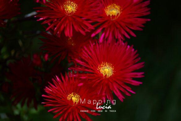 Fotografie del Cuore - Fiori - Pht Emanuela Gizzi Mapping Lucia (23)