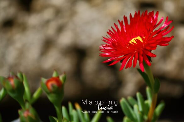 Fotografie del Cuore - Fiori - Pht Emanuela Gizzi Mapping Lucia (42)